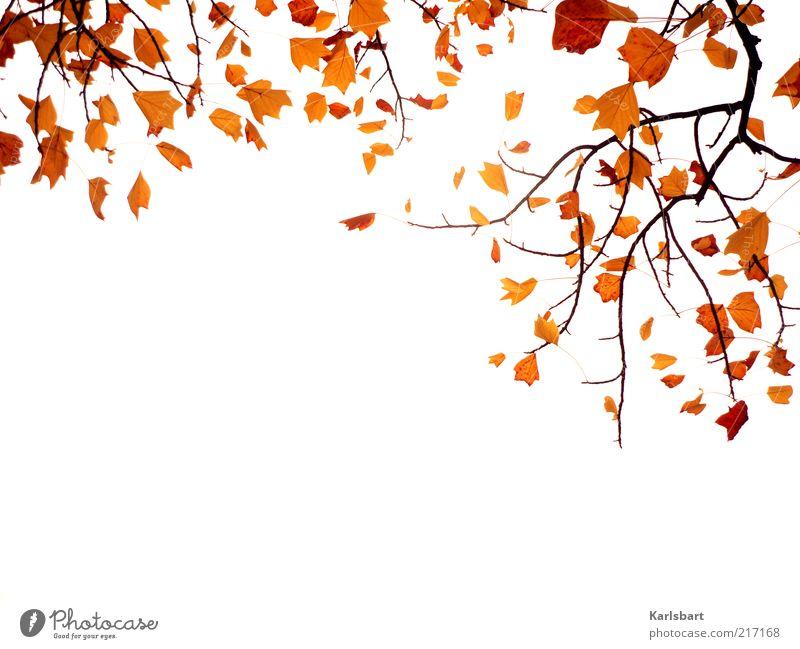 herbstflattern. Lifestyle Natur Pflanze Himmel Herbst Blatt Holz Vergänglichkeit Wandel & Veränderung herbstlich Herbstlaub Ast hängend Farbfoto Außenaufnahme