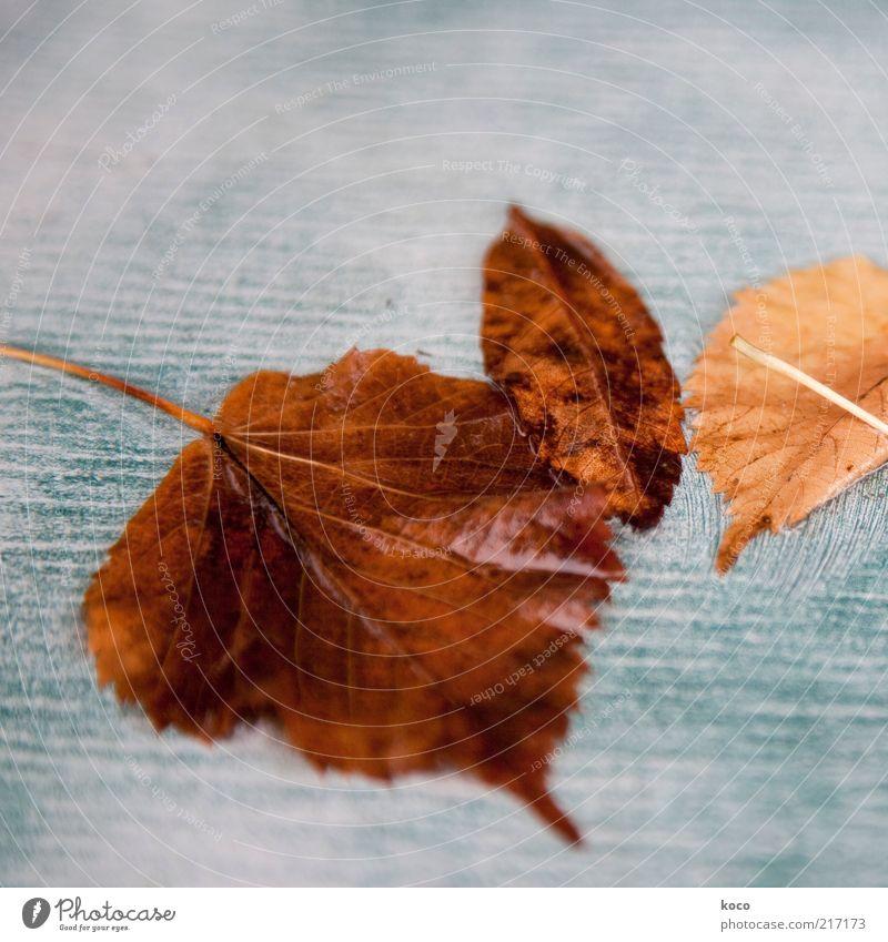 abgeblättert Wasser Herbst Blatt fallen liegen verblüht alt kalt nass braun gelb gold grau grün weiß Ende Verfall Vergänglichkeit Gedeckte Farben Makroaufnahme