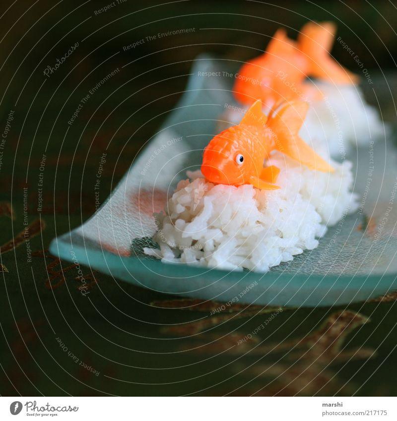Sushi, mal anders weiß Ernährung Tier Leben Orange Glas Lebensmittel Fisch Freizeit & Hobby Asien Frucht Japan Teller Dinge Reis