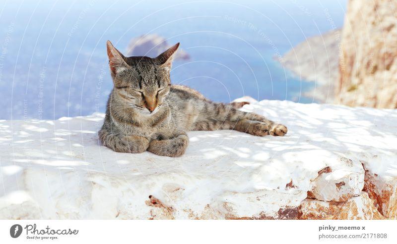 Chiller in Griechenland Landschaft Wasser Himmel Schönes Wetter Meer Insel Tier Katze Tiergesicht Pfote 1 schlafen ästhetisch Zufriedenheit getigert fell cat