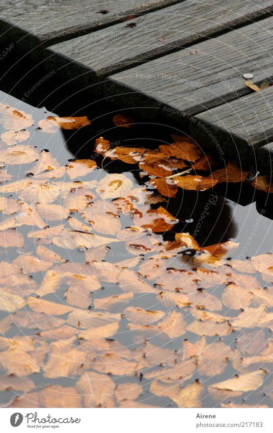 Sommer - ins Wasser gefallen Herbst Blatt Seeufer Steg Holz braun grau schwarz Einsamkeit Verfall Vergänglichkeit Traurigkeit Herbstlaub Farbfoto Außenaufnahme