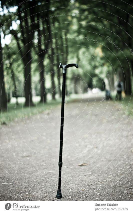 barrierefrei Pflanze Baum Park außergewöhnlich Spazierstock Gehhilfe Fußweg standhaft Behindertengerecht Gedeckte Farben Nahaufnahme Menschenleer
