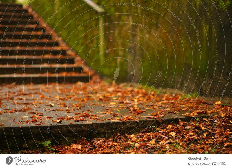 Herbstgold. V Mauer Wand Treppe alt kalt Stimmung Herbstlaub herbstlich Herbstbeginn morsch Moos Farbfoto Außenaufnahme Menschenleer Morgendämmerung ruhig