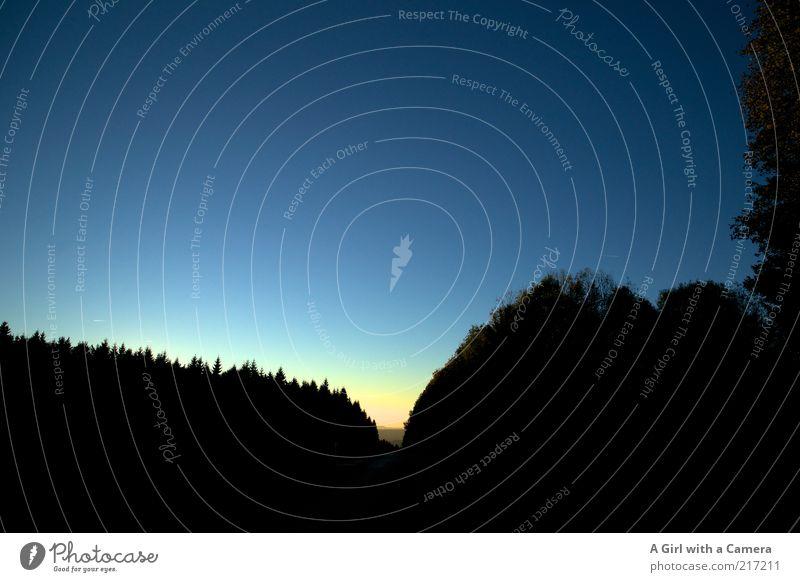Never Never Land Natur blau schwarz Wald dunkel hell Umwelt Horizont Nachthimmel fantastisch Idylle Hügel leuchten Schönes Wetter Baumkrone Waldlichtung