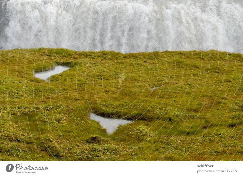Anlauf und ein Köpper rein... Wasser Wiese Gras groß Island Moos Wasserfall Pfütze fließen Schlucht laut Pflanze gewaltig zweiteilig Gullfoss
