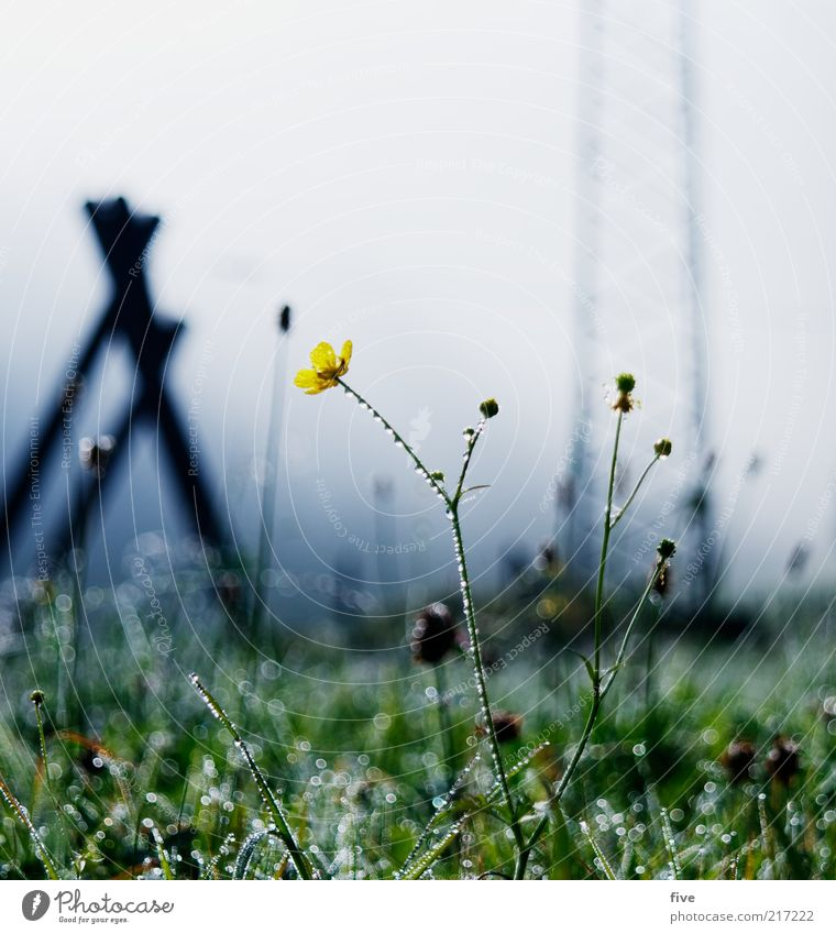 going am wilden kaiser Umwelt Natur Landschaft Erde Wasser Wassertropfen Himmel Wolken Herbst Pflanze Gras Blatt Grünpflanze Wiese dunkel kalt Nebel Strommast