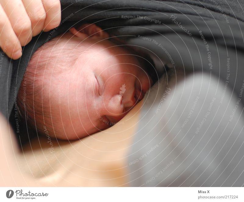 Fall in Love Mensch Hand ruhig Liebe Leben Kopf Gefühle Glück Erwachsene träumen klein Familie & Verwandtschaft Baby Beginn Finger schlafen