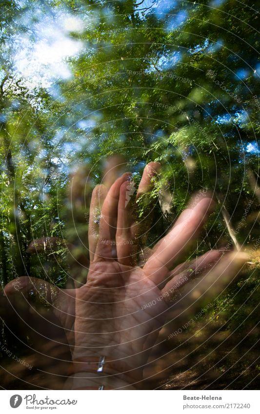 Jenseits des Mainstreams | Handgreiflichkeiten Fingerfood Leben Freizeit & Hobby wandern Sport Fitness Sport-Training Natur Himmel Baum Wald sprechen