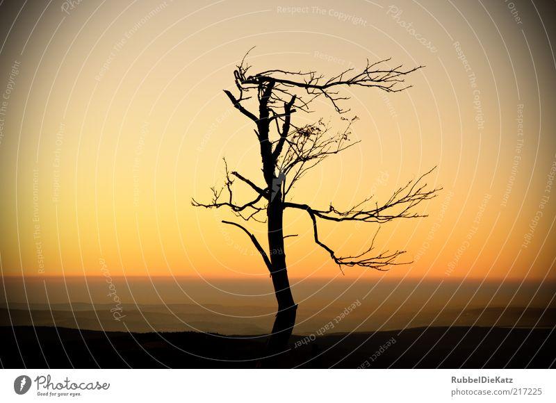 Sturmfrisur Umwelt Natur Landschaft Erde Himmel Wolkenloser Himmel Horizont Sonnenaufgang Sonnenuntergang Herbst Klima Dürre Pflanze Baum Berge u. Gebirge Wüste