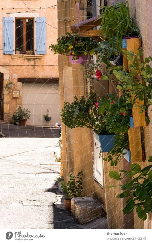Hausgarten mit Zigarette Mensch alt Hand Blume Erholung ruhig Fenster Wand Blüte Senior Mauer Garten Häusliches Leben Idylle 60 und älter