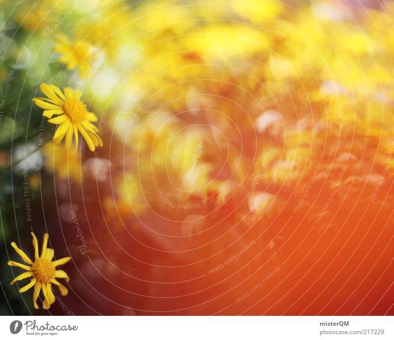 Portuguese Flowers. Natur Pflanze Sommer Blume rot Landschaft Umwelt gelb Wärme Blüte Frühling Zufriedenheit ästhetisch Blühend retro weich