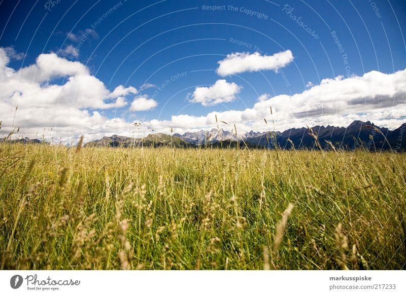 bergwelt Pflanze ruhig Einsamkeit Ferne Erholung Wiese Gras Berge u. Gebirge Freiheit Landschaft frisch Alpen Gipfel Duft Schönes Wetter