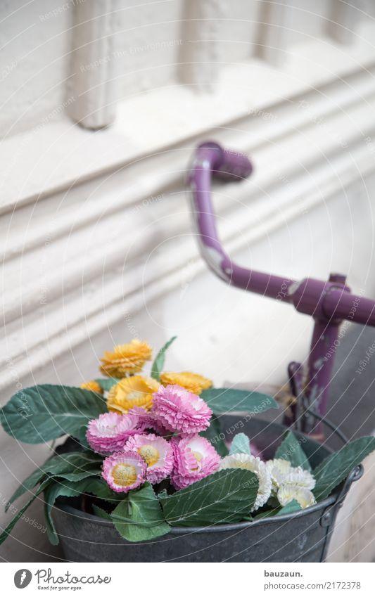 blume im eimer. schön Blume Gesundheit Blühend Fahrradfahren sportlich Schweden Verkehrsmittel Muttertag