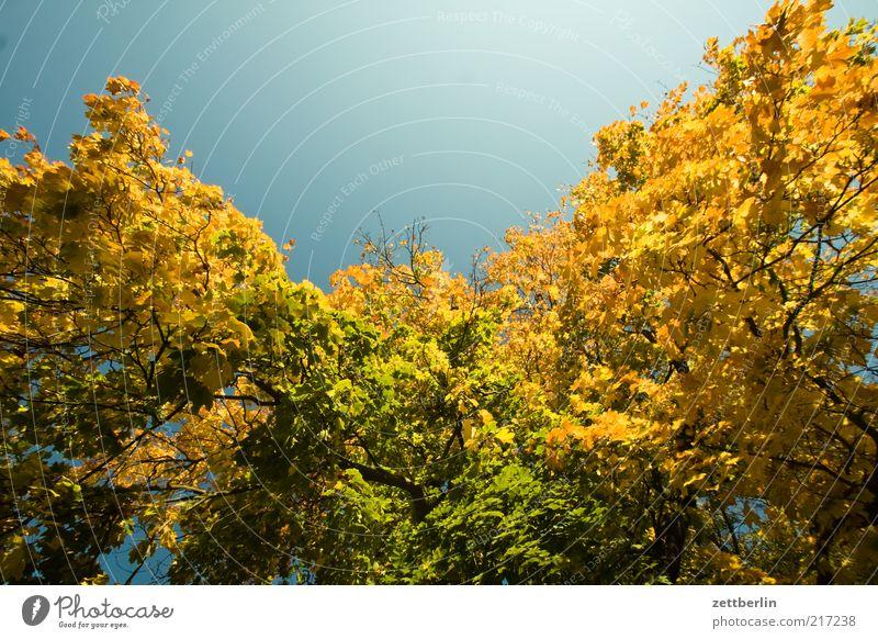 Weimar Umwelt Natur Landschaft Pflanze Himmel Herbst Klima Schönes Wetter Baum Gefühle Stimmung schön Oktober Laubbaum Herbstlaub Blatt gold Farbfoto mehrfarbig