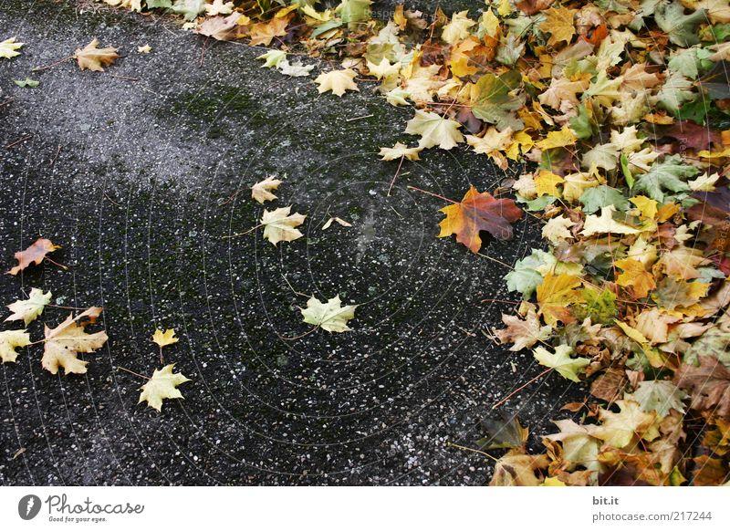 Blättereck Blatt gelb Straße dunkel Herbst grau Wege & Pfade dreckig Wind Umwelt nass gold Wandel & Veränderung liegen Asphalt Vergänglichkeit