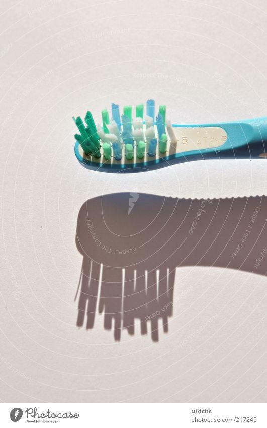 Bürste Zahnbürste authentisch blau Reinlichkeit Sauberkeit Präzision Farbfoto Innenaufnahme Nahaufnahme Detailaufnahme Makroaufnahme Strukturen & Formen