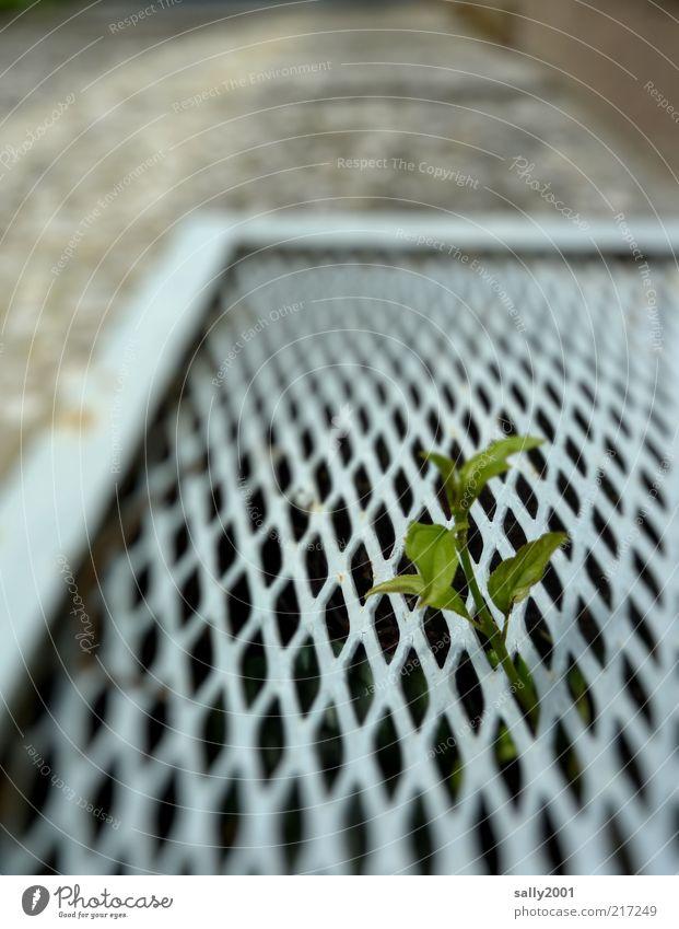 Wildlife in der Großstadt Natur grün Pflanze Blatt Leben Wand oben Mauer Metall Umwelt Beton Hoffnung Wachstum stehen einfach einzigartig