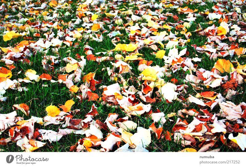 feuilles jaunes Natur Erde Herbst Schönes Wetter Gras Blatt Wiese mehrfarbig gelb grün ruhig Herbstlaub Rasen Jahreszeiten Farbfoto Außenaufnahme Menschenleer