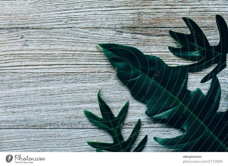 Kreatives Layout aus grünen Blättern Sommer Garten Tisch Kunst Natur Pflanze Baum Blatt Wald Fluggerät Mode Wachstum frisch hell trendy natürlich oben weiß