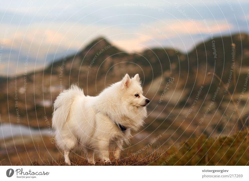 Hund Himmel Natur weiß Landschaft Tier Berge u. Gebirge Herbst Gras Freiheit See wild Sträucher frei Abenteuer Gipfel