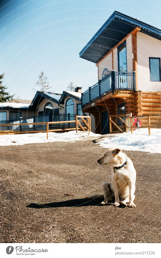 blend mich nicht! Hund alt Ferien & Urlaub & Reisen Winter Tier Haus Ferne Erholung Schnee Freiheit träumen Zufriedenheit Wohnung Fassade warten authentisch