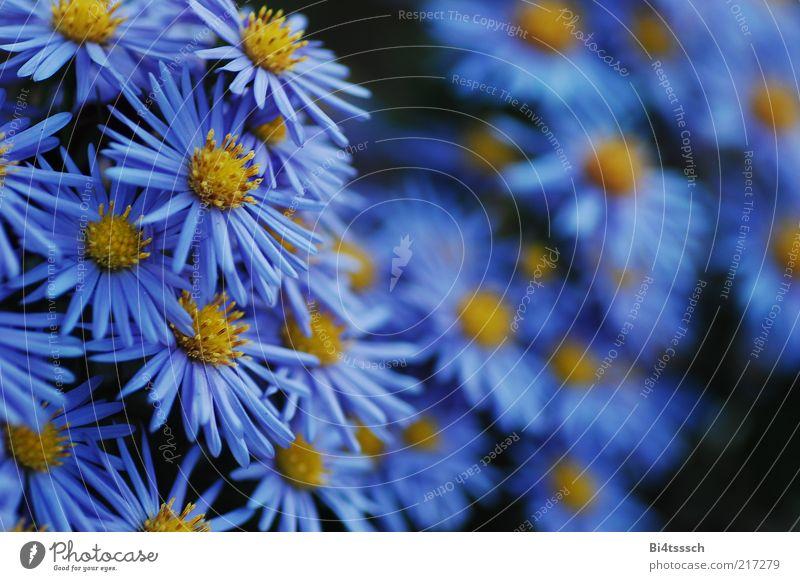 rot. Umwelt Natur Pflanze Blüte ästhetisch schön blau gelb schwarz Kraft Farbfoto mehrfarbig Außenaufnahme Tag Schatten Silhouette Schwache Tiefenschärfe