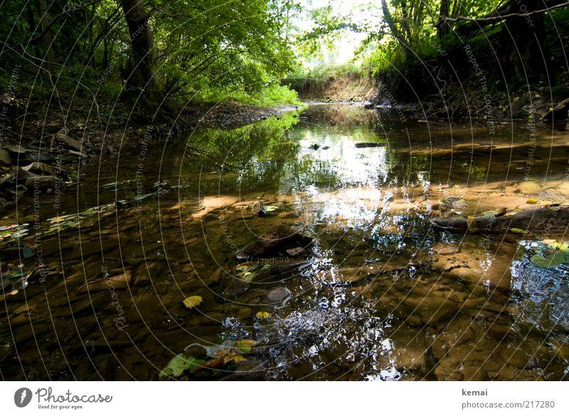 Bachlauf Umwelt Natur Landschaft Pflanze Wasser Sonnenlicht Sommer Herbst Schönes Wetter Baum Sträucher Blatt Grünpflanze Wildpflanze Wald Fluss grün ruhig