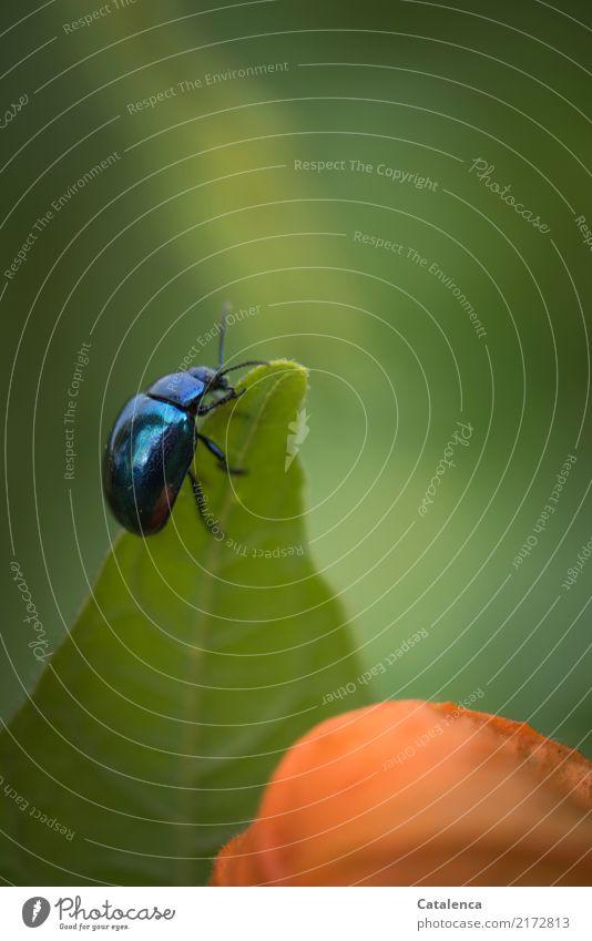 Auf Nahrungssuche Natur Pflanze Sommer blau schön grün Tier Blatt Umwelt Blüte Bewegung Garten außergewöhnlich orange Design glänzend