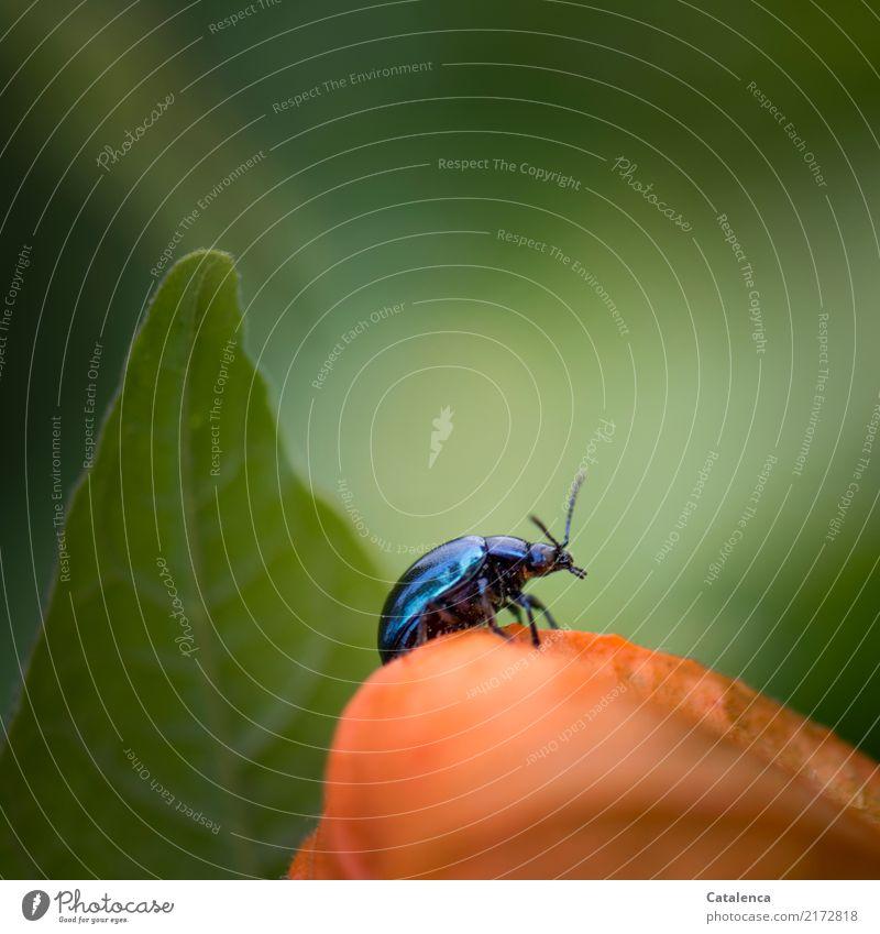 Spaziergang Natur Pflanze Sommer blau Farbe grün Tier Blatt Umwelt Blüte Garten orange ästhetisch beobachten Käfer krabbeln