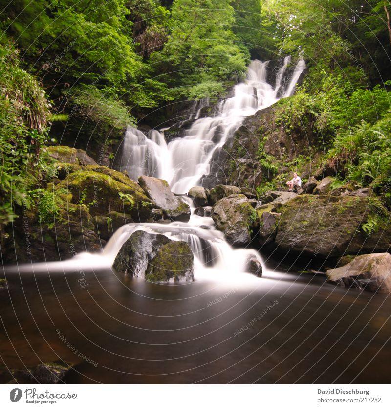 Natur pur Landschaft Pflanze Wasser Frühling Sommer Baum Moos Grünpflanze Wald Felsen Flussufer Bach Wasserfall braun grün weiß Republik Irland