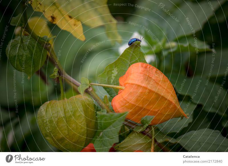Auf Wanderschaft Natur Pflanze blau Sommer schön grün Tier gelb Umwelt Bewegung Garten orange leuchten ästhetisch bedrohlich Sicherheit