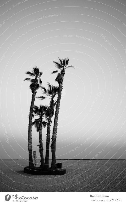 Strandparty Meer ruhig Einsamkeit Ferne Palme