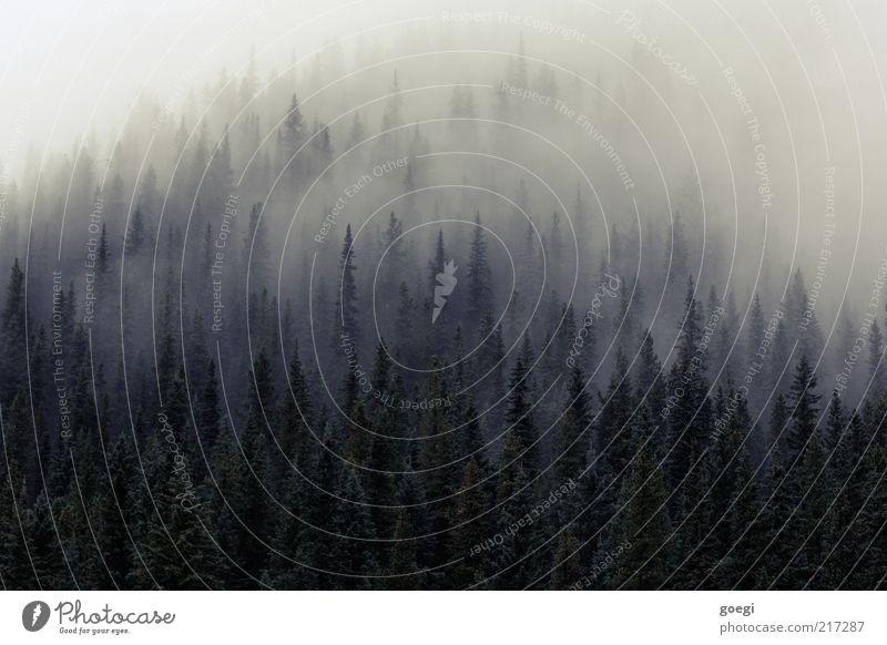 Zwerge ausräuchern Natur Landschaft Pflanze Herbst Baum Wald Urwald Hügel bedrohlich dunkel trist Einsamkeit Nebel Nebelschleier Nebelwald Nebelstimmung