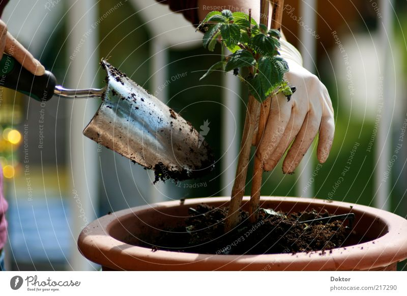 grünes händchen Hand Finger Pflanze Frühling Blume natürlich Verantwortung Farbfoto Menschenleer Tag