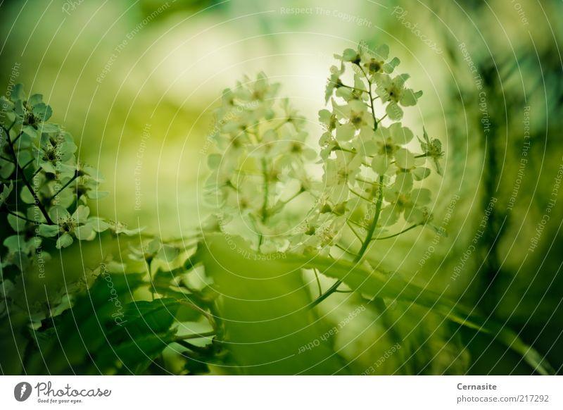 Natur weiß Blume grün Pflanze dunkel Herbst Gefühle Stimmung Umwelt groß ästhetisch authentisch außergewöhnlich Duft