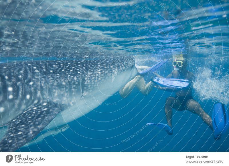HAAAPS ... Mann Natur blau Ferien & Urlaub & Reisen Freiheit Schwimmen & Baden außergewöhnlich groß Tourismus Reisefotografie Fisch Haifisch Asien entdecken Mut Fressen