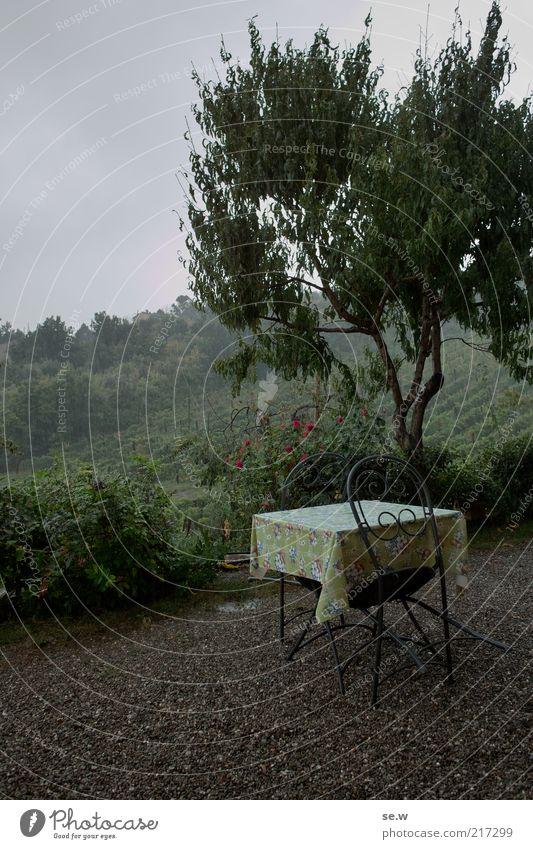 Frühstück im Regen (Toskana [3]) Baum Weinberg Terrasse Tisch Stuhl Ferien & Urlaub & Reisen Stimmung Romantik ruhig Fernweh Einsamkeit Farbfoto Außenaufnahme