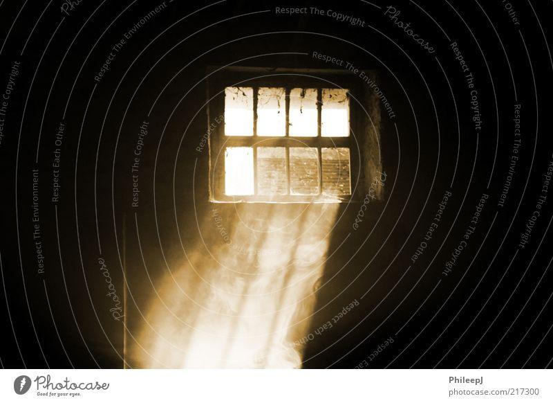Sonne gelb Wärme Nebel gold Feuer weich trocken Urelemente Schatten Zeit