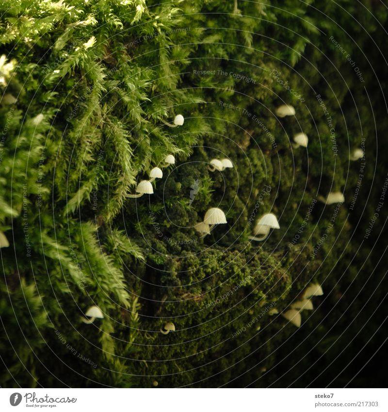 nach oben Pflanze Moos Pilz entdecken Wachstum klein nah grün weiß winzig zielstrebig aufwärts Orientierung verstecken Nahaufnahme Menschenleer
