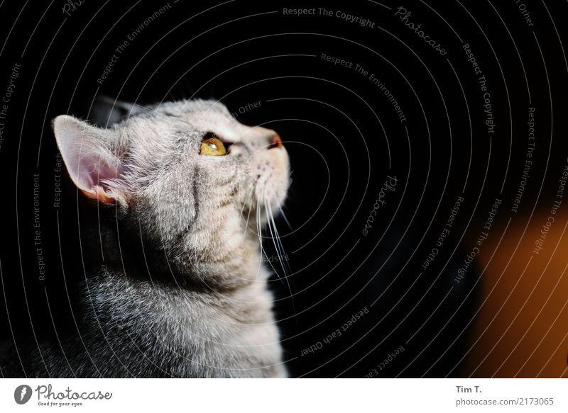 Katze Tier Zufriedenheit Haustier