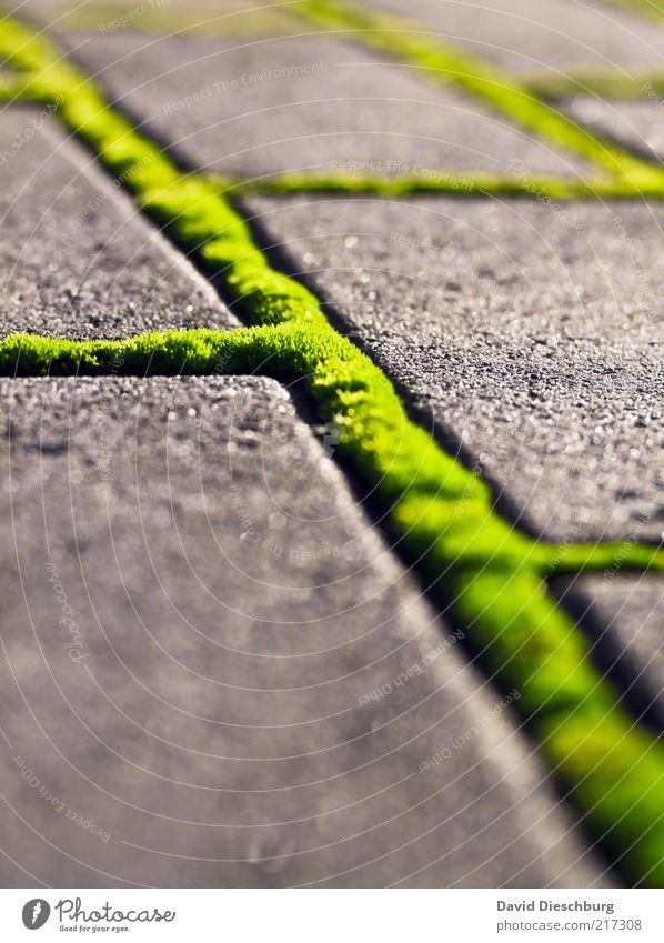 Grünes Netzwerk Natur grün Sommer Wege & Pfade grau Stein hell Linie Wachstum Bürgersteig Makroaufnahme Verbindung diagonal Moos Vernetzung