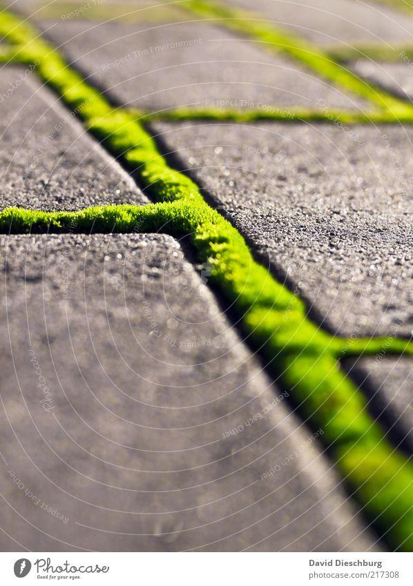 Grünes Netzwerk Natur Sommer Moos Grünpflanze Wege & Pfade grün Bürgersteig Strukturen & Formen Verbindung Hochformat Linie Stein Pflastersteine diagonal hell