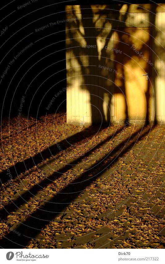 Lange Schatten Baum Blatt schwarz gelb Herbst grau braun Tür bedrohlich geheimnisvoll Hütte Jahreszeiten Schatten Abenddämmerung seltsam