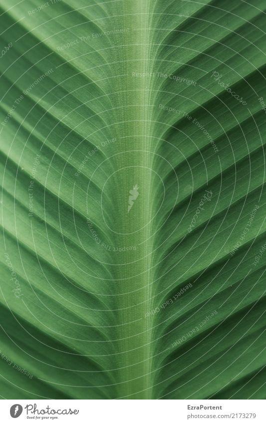 H Umwelt Natur Pflanze Blatt Grünpflanze Garten Linie grün Farbe Hosta Strukturen & Formen Farbfoto Außenaufnahme Nahaufnahme Detailaufnahme Muster Menschenleer