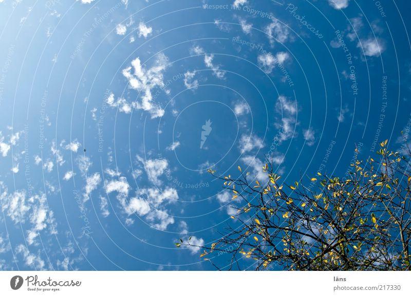 der Herbst geht Natur Himmel blau Pflanze ruhig Blatt Wolken Umwelt ästhetisch Wandel & Veränderung Ast Abschied Schönes Wetter