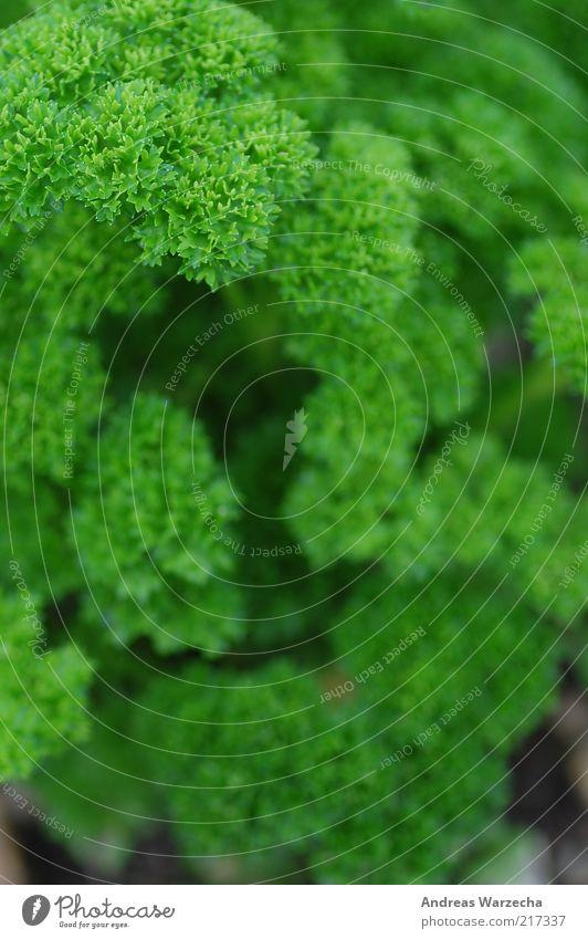 Darf´s noch etwas Grün sein? Lebensmittel Kräuter & Gewürze Umwelt Natur Pflanze Blatt Grünpflanze Nutzpflanze Petersilie einfach frisch schön lecker grün