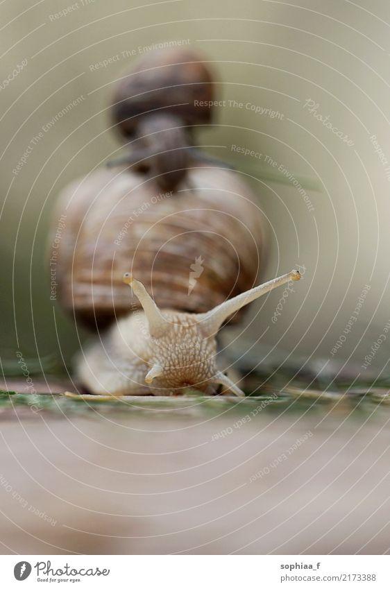 Schneckenausflug Natur Tier ruhig Tierjunges außergewöhnlich Zusammensein Freundschaft Wildtier Freundlichkeit Hilfsbereitschaft Schutz Sicherheit Vertrauen