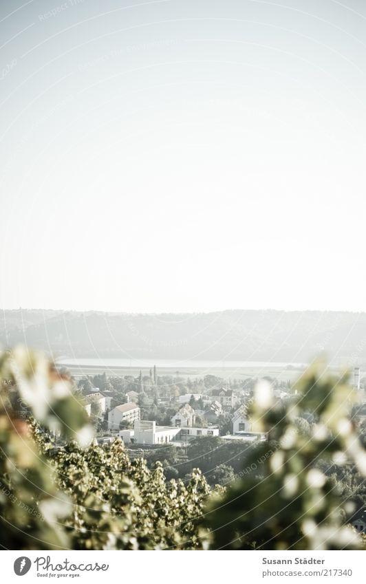 Radebeul Garten Kleinstadt Stadtrand hell Weinberg Weinbau Blatt Herbst Haus Elbe Gedeckte Farben Außenaufnahme Detailaufnahme Menschenleer Textfreiraum oben