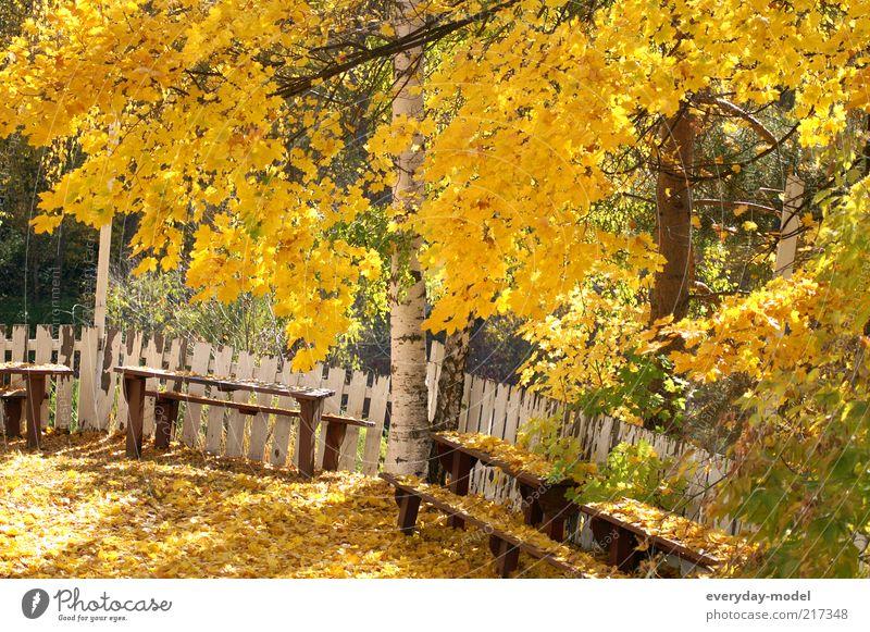 Der Sommer geht Baum grün ruhig Blatt gelb Wald Leben Erholung Herbst Gefühle Park Zufriedenheit Stimmung gold Hoffnung Wandel & Veränderung
