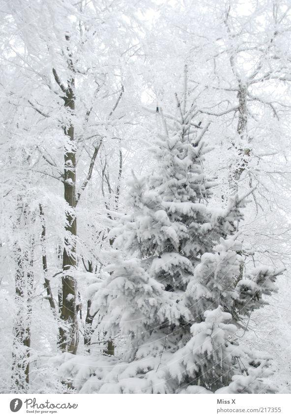 Weihnachtszeit, Weihnachtszeit, schöne Weihnachtszeit Natur weiß Baum Winter Wald kalt Umwelt Schnee Wetter Klima Weihnachtsbaum Tanne Schneelandschaft Pflanze